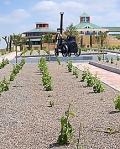 jardin_baco